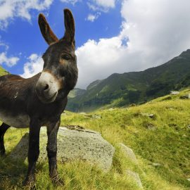 Petite histoire intuitive avec un âne